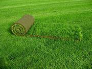 Устройство газонов любой сложности