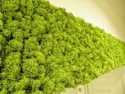 Вертикальное озеленение. Зимний сад. Стены из мха.
