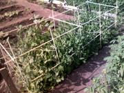 Изделия из стеклопластика для сада,  огорода и сельского хозяйства