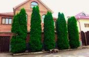 Продажа Деревьев и Кустарников в Москве