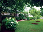 Ландшафтный дизайн,  газон посевной,  рулонный. Опрыскивание.