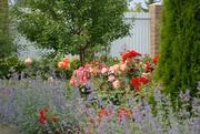 Авторское озеленение Вашего сада